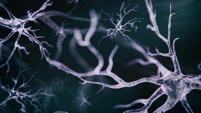 Beynin Yapısı, Bölümleri ve Görevleri